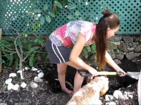 Como hacer composta en casa youtube for Como hacer piscicultura en casa
