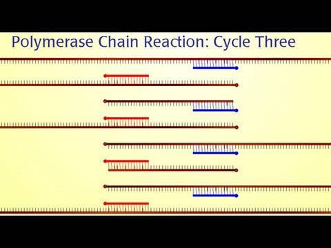 Research Techniques Made Simple: Polymerase Chain Reaction (PCR)