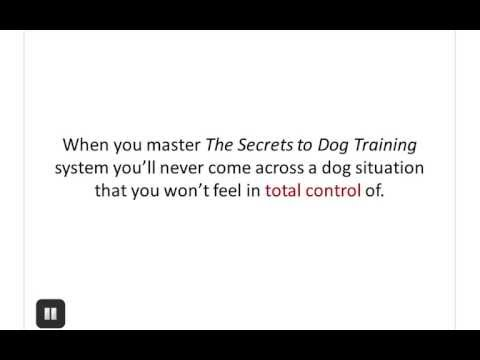 Dog Training Guide - Best Online Dog Training Available