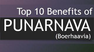 Top 10 Health Benefits of Punarnava - Medicinal Plants Boerhavia / Punarnava