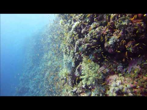 Diving the Elphinstone Reef - Southern Red Sea, Egypt
