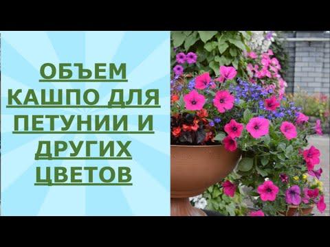 Объем кашпо для петунии и других цветов