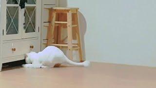 [까까캔디] 고양이장난감 ㅡ까까냥이 드리블 좀 하는데~♡ㅡ