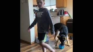 German Shepherd plays with kids *watch their interaction