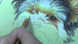 Eye Tutorial - Yorkshire Terrier - Pastel Pencils