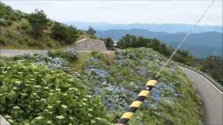 徳島県大川原高原の 風車と紫陽花