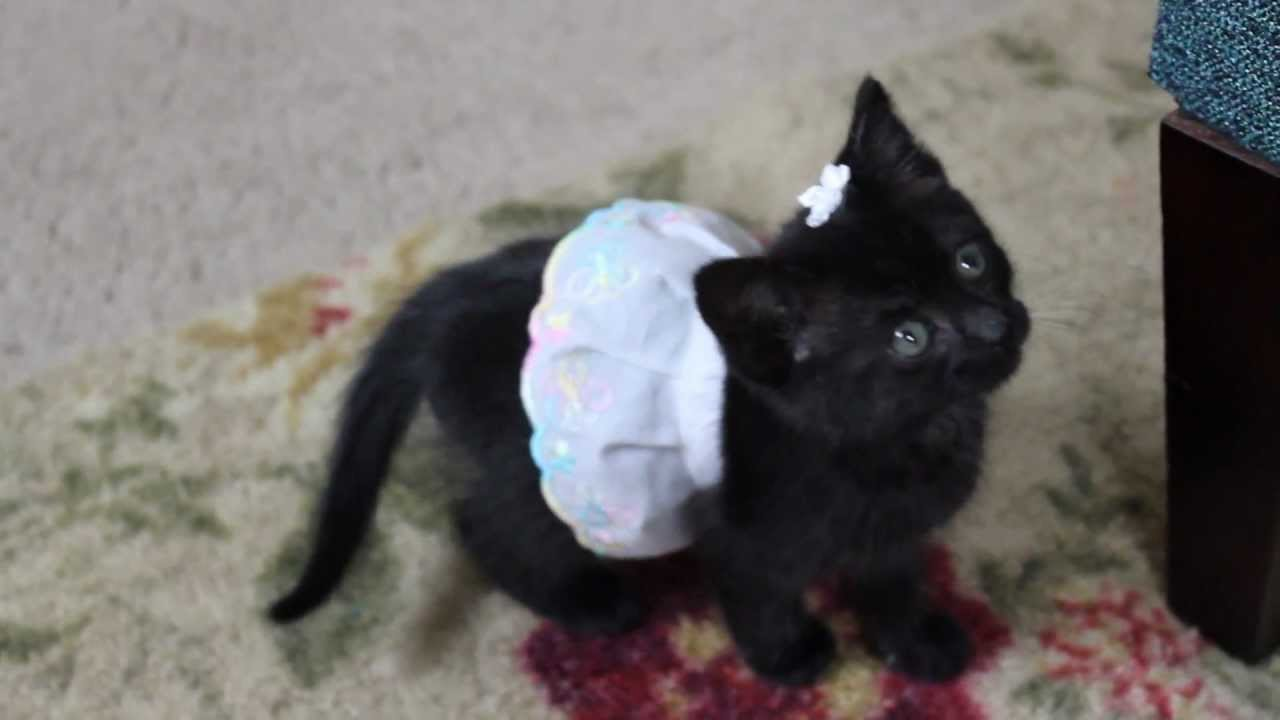 Cute Kitten Playing in a Dress - YouTube