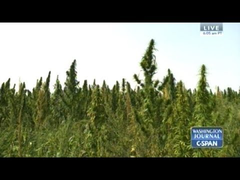 C-SPAN Call In: The Return Of The United States HEMP Industry