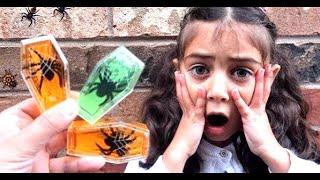 شفا خافت من الصرصور !!! Heidi & Zidane search for giant bugs beside the house!