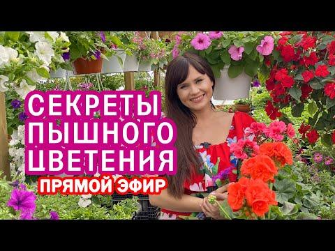 Секреты пышного цветения . Ответы на вопросы ( прямой эфир 17.06 .20) Марина Патрина zacvetet