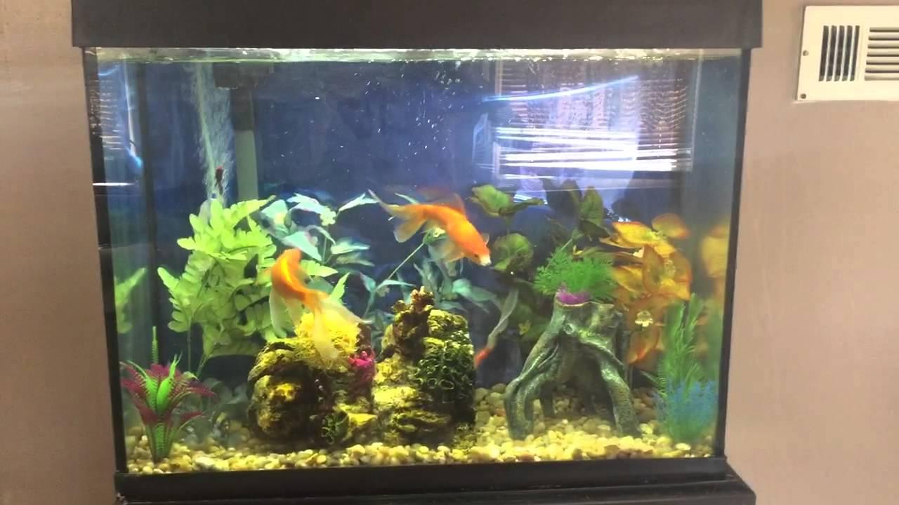Petsmart fish tanks top liven up your fish tank with for Petsmart fish tanks for sale