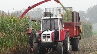 Steyr 9094/maishakselen/harvesting maize/2013/The Netherlands/Grotenhuis uit Kring van Dorth(Lochem)