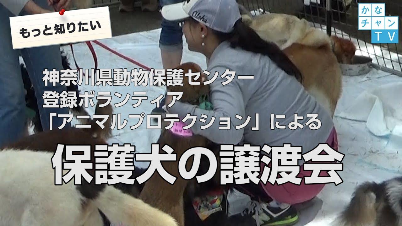 神奈川 犬 小型 犬 保護