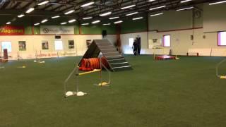 Tuulia OMD agility seminarium med tollarna