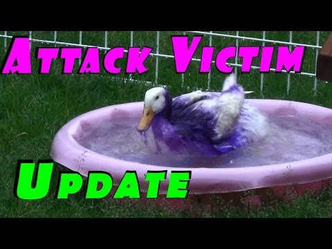 how to humanely kill muscovy ducks