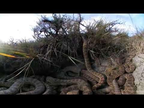 Virtual Reality 360 Inside Rattlesnake Den