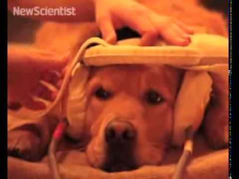 Dog brain responds to calls just like human brain