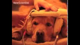 Dog brain responds to calls just like human brain