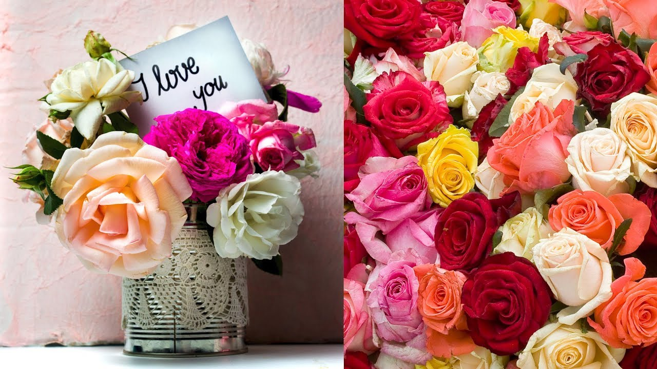 Red White Or Violet Know The Meaning Behind The Rose Color Your