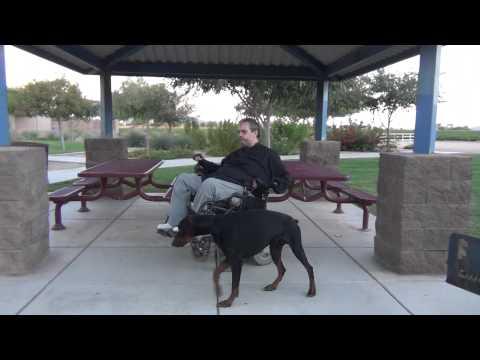 EUROPEAN - DOBERMAN PINSCHER Phoenix AZ - PHARAOH - DOG TRAINING