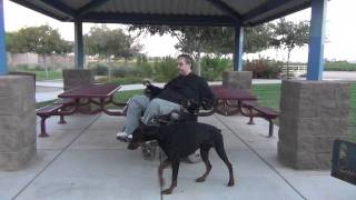 European - Doberman Pinscher Phoenix Az - Pharaoh - Dog Training