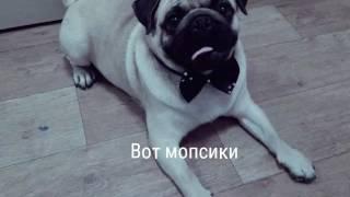 Милашки фото собачек