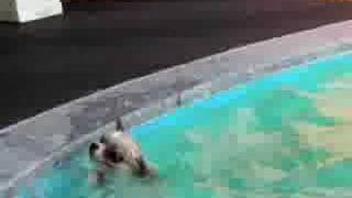 溺れてるみたいですけど、頑張って泳いでます。