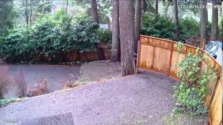 Gail's Dead tree breaks and falls on my property - Stafaband