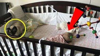 То, что кошка делает с ребенком, поразит вас!