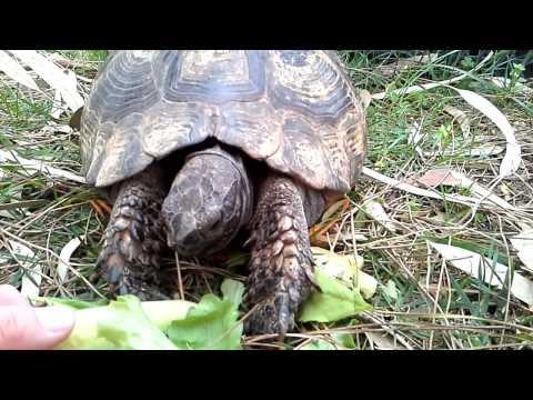 Наши черепахи няши!