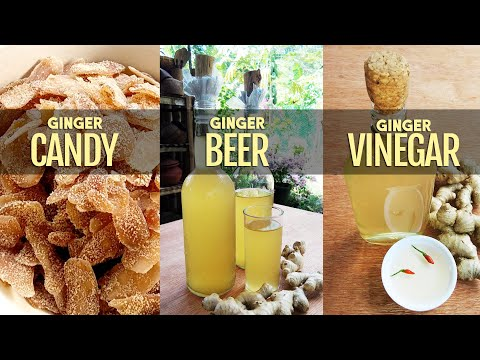 HOW TO MAKE GINGER CANDY, BEER AND VINEGAR (3 In 1)