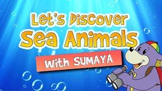 Zaky Discoveries | Sea Creatures