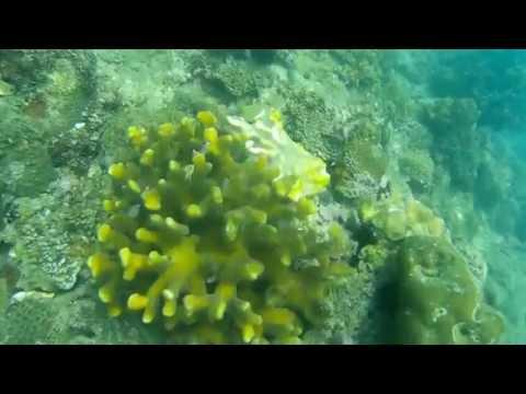 Madalag Sindangan, Zamboanga Del Norte - Marine Sanctuary