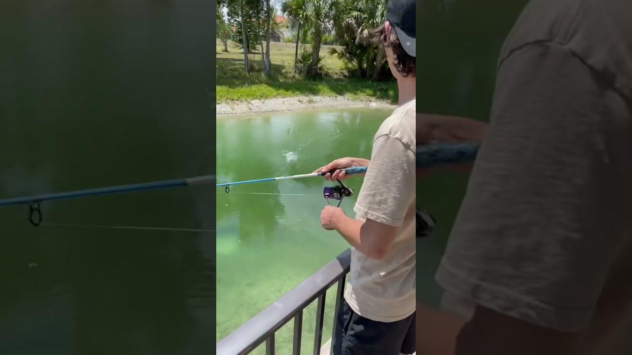Bigger Bass Started ATTACKING!😮 #shorts
