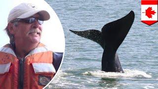 Nelayan dibunuh paus saat mencoba menyelamatkannya - Tomonews