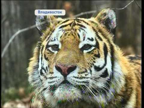 Удивительный мир Приморья представил на выставке фотохудожник Игорь Крюков