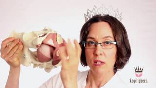 Repeat youtube video 6 Reasons NOT to Buy a Kegel Exercise Device -- Kegel Queen