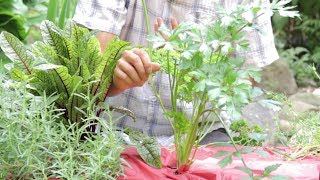 How To Harvest Chives And Parsley