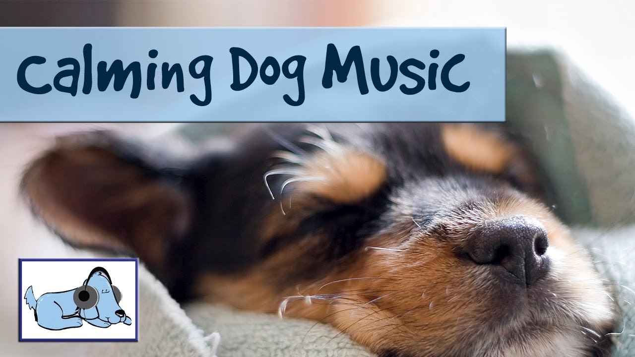 Calming Dog Music - Music for Pregnant or Ill Dogs to ... Relaxing Dog Music Youtube