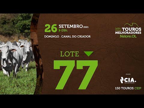 LOTE 77 - LEILÃO VIRTUAL DE TOUROS 2021 NELORE OL - CEIP