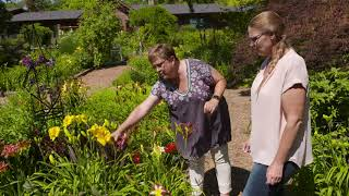 Home Tour of Daylilies