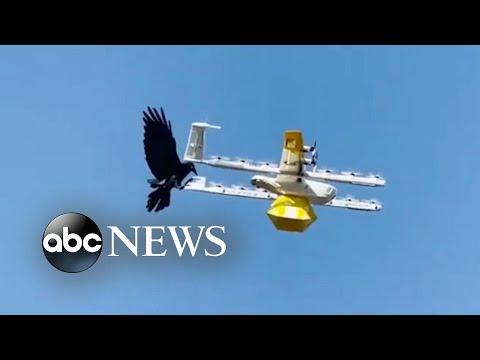 Raven attacks drone delivering coffee | ABC News