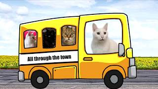 Wheels on the bus- Cats Version - Singing Cats