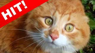 Приколы с кошками Кошки!  Улыбнись   1  ТВ Смотри!