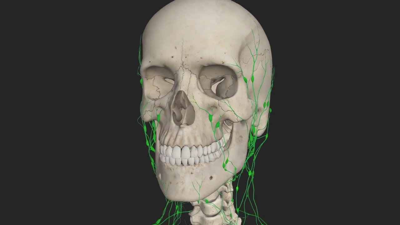 Introduction To The Lymphatic System Animated Tutorial Complete
