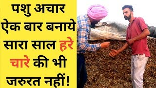 Silage complete information in hindi|silage making process in india|Dairy farm silage