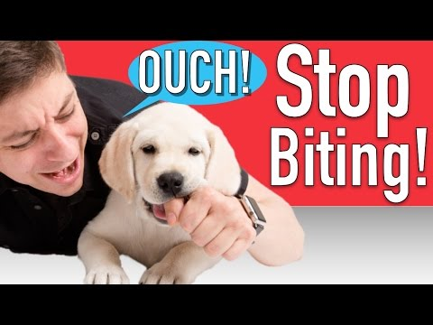 How To Train Your Puppy To Stop Biting