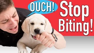 How to Train your Puppy to Stop Biting thumbnail