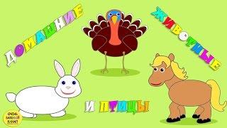 Домашние животные и птицы для детей. Часть 2. Развивающие мультфильмы для детей
