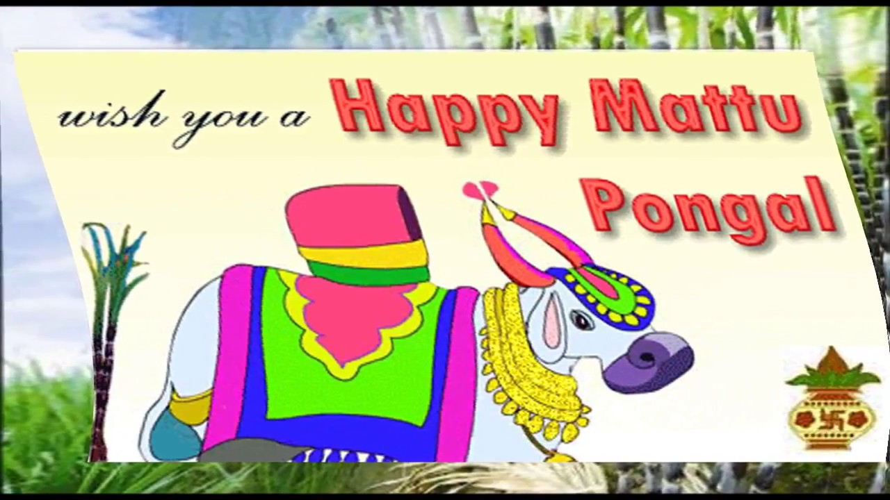 Happy pongal 2018 download pongal video greeting wishes whatsapp happy pongal 2018 download pongal video greeting wishes whatsapp video sms e card youtube m4hsunfo